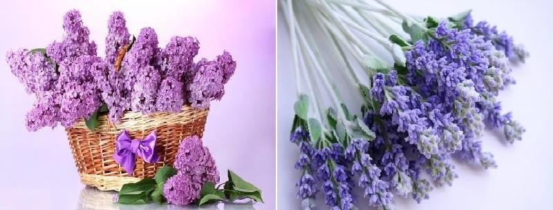 цветы сиреневого оттенка